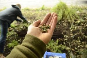 Peg workshop seed saving